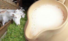 Кормление молочных коз