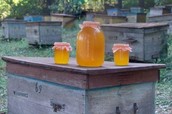 Улей и мёд