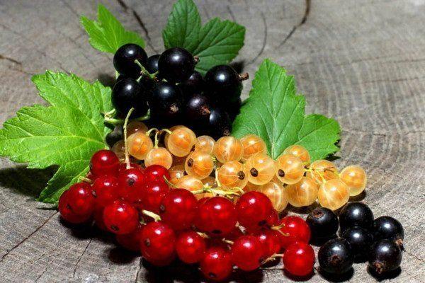 Описание и характеристика лучших сортов красной смородины