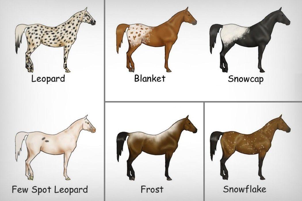 Варианты окраса чубарых лошадей