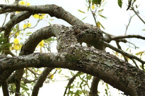 Бороздчатость древесины