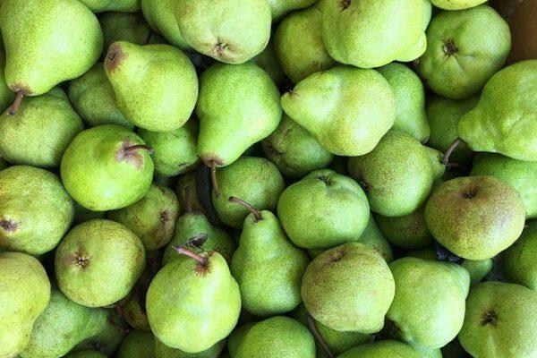 Плоды груши «Завея»