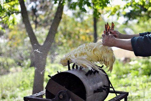 Метод ощипывания утки