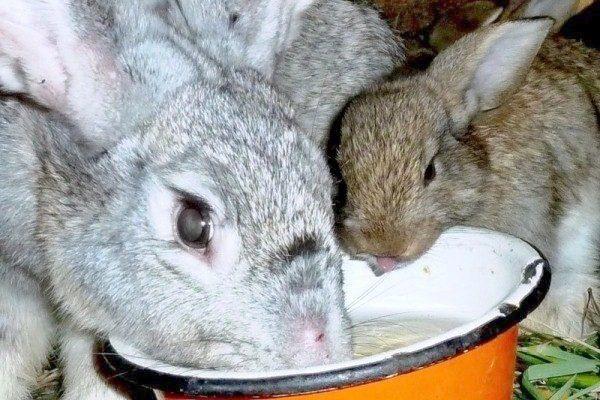 Поилка для кроликов из миски