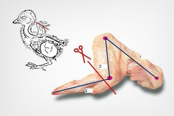 Схема обрезки крыла