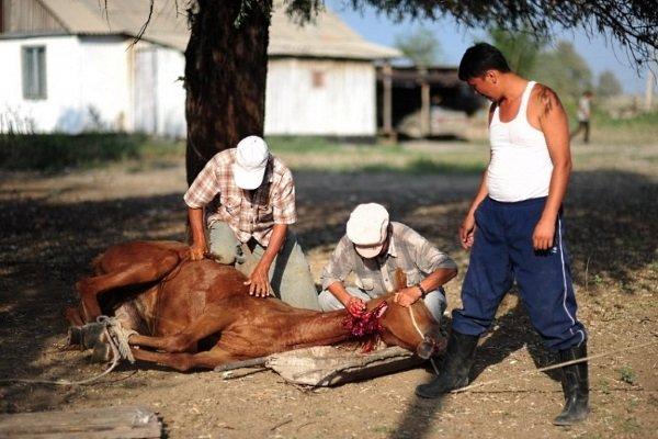 Забой лошади