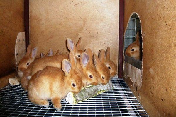 Кора для крольчат