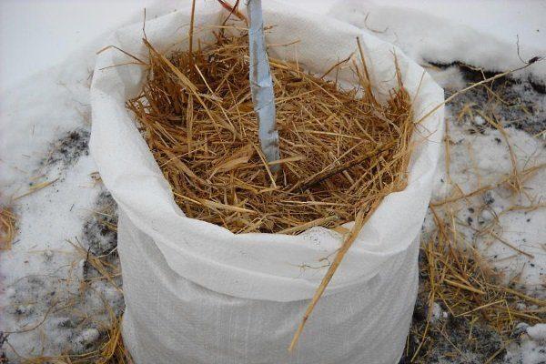Подготовка абрикосы к зиме