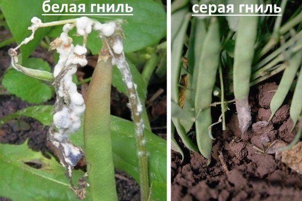bezymyannyy-11.jpg
