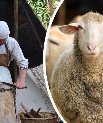 Выделка шкуры овцы