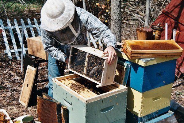 Высадка из пчелопакета