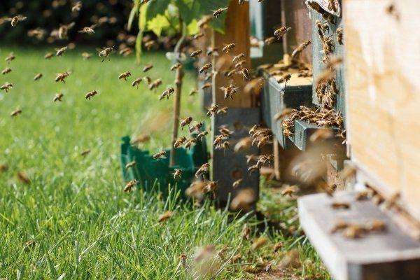 Пчелы и ульи