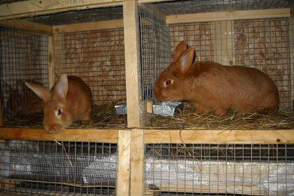Кормление кролей