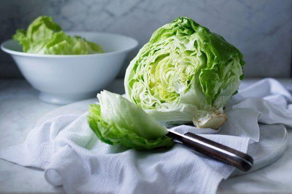 Как выращивать салат айсберг в домашних условиях?