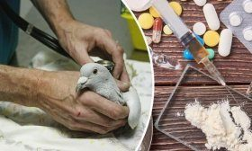 Препараты для голубей