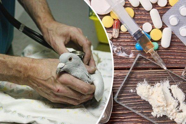 Родотиум для голубей как применять для чего нужен