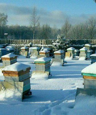 Зимовка пчёл