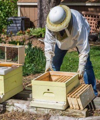 Пересадка пчелосемьи