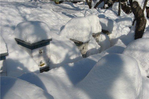 Зимовка под снегом