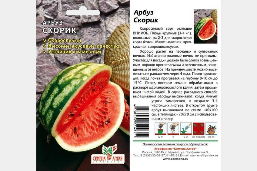 Характеристики арбуза Скорик