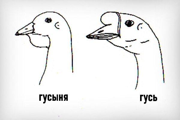 Голова гусей