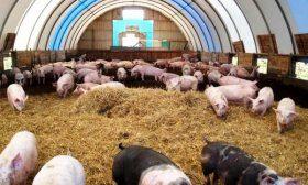 Ферма с глубокими подстилками
