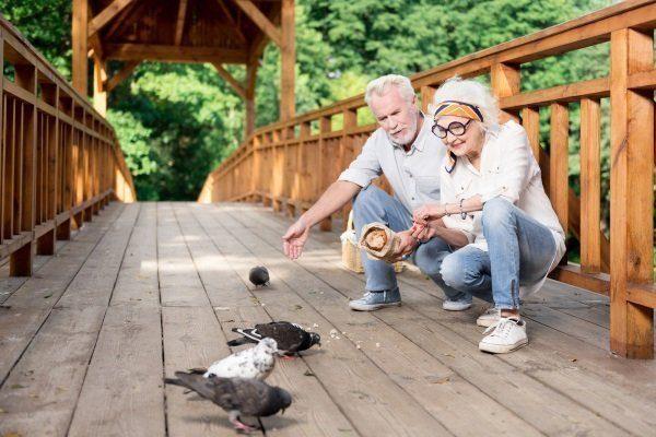 Кормить голубей лучше зерном, чем хлебом