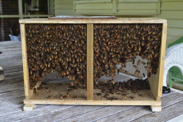 Бессотовый ящик для пчелопакетов