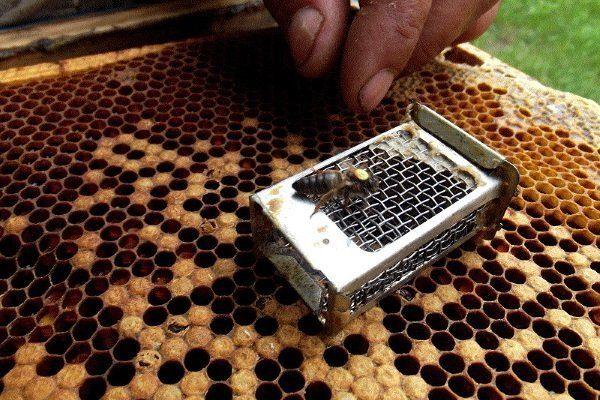 Клеточка и пчеломатка