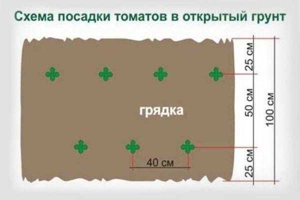 Схема посадки томатов в открытый грунт
