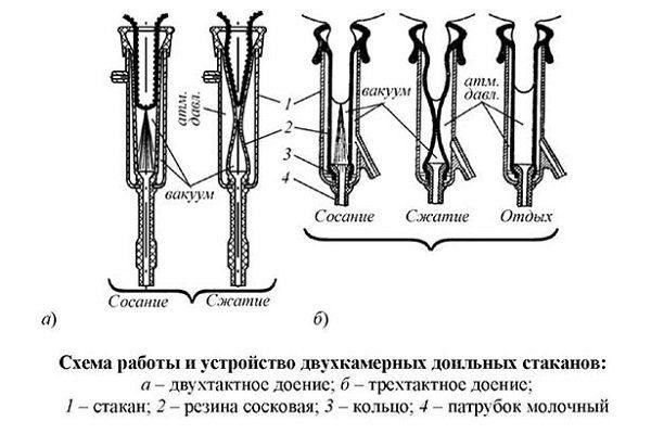 Схема доильного аппарата