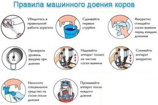 Правила доения