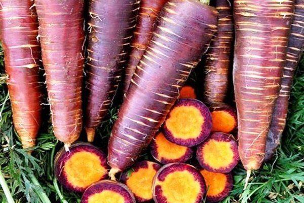 Пурпурный эликсир