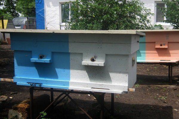 Двухматочное содержание пчел