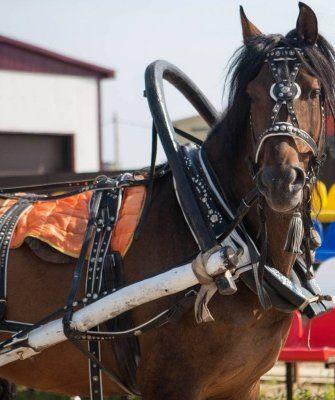 Запряжённая лошадь