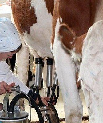 Доильные аппараты для коров