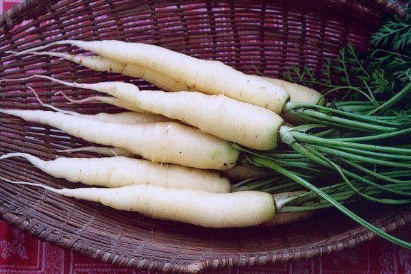 Лунная белая морковь