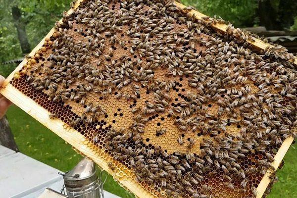 Леток с пчелами