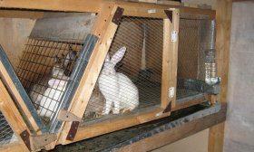 Клетка для кроликов из дерева
