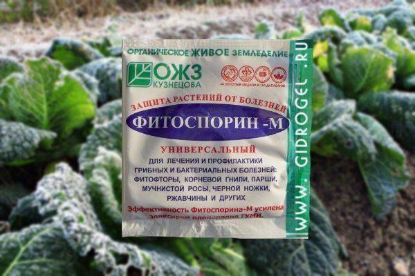 Обработка капусты Фитоспорином-М