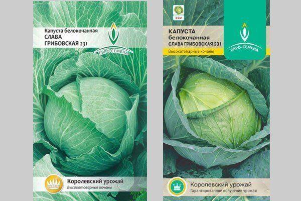 Семена капусты Слава Грибовская 231