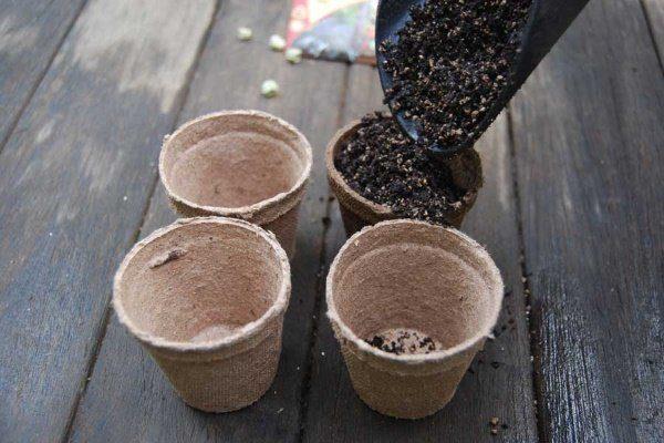 Торфяные горшки для рассады