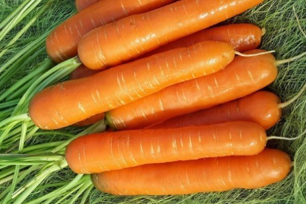 Морковь Невис F1