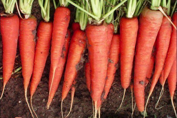 Морковь Скарла