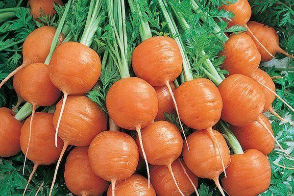 Морковь Каротель Парижская