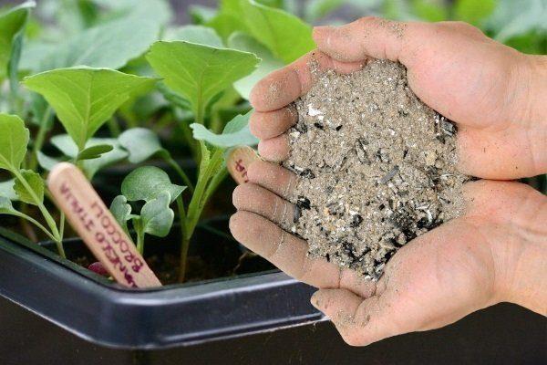 Удобрение рассады капусты золой