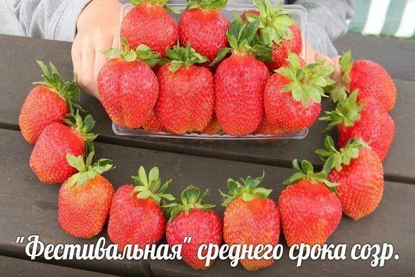 Фестивальная