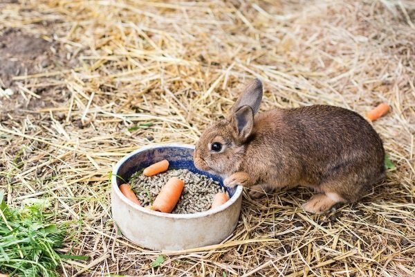 Питание кролика Ризен