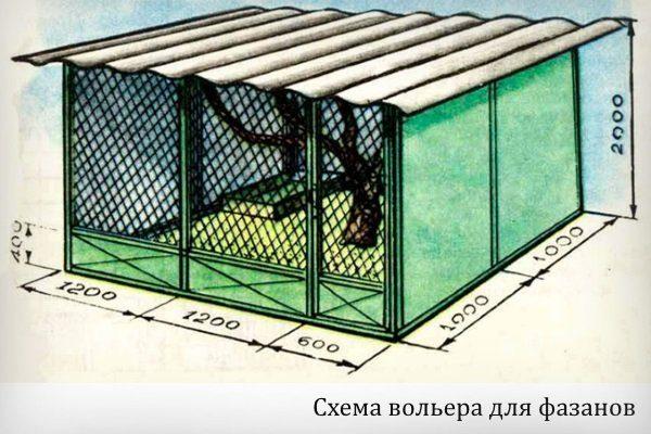 Схема вольера для фазанов