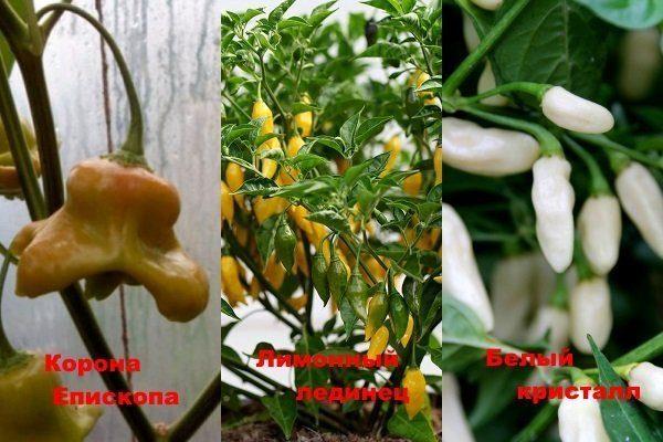 Ягодоносные сорта перца